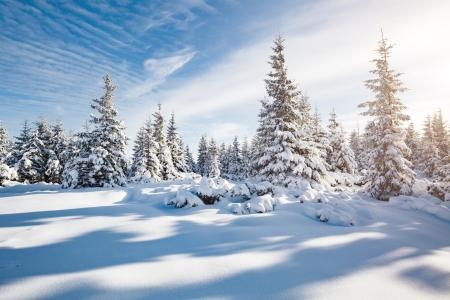 God jul fra Landax!